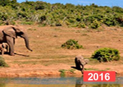 Lucha contra el hambre para garantizar el derecho a la alimentación. Madagascar