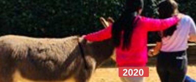 Ayuda a niños para la reparación del vínculo a través de la equinoterapia 2020