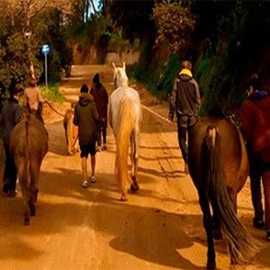 Ayuda a niños: educación emocional con caballos
