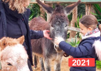 Reparación del vínculo a través de la equinoterapia en España 2021